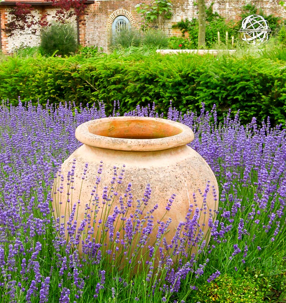 photograph of hedges and lavender planted by garden landscaping company Babylon Design Oxfordshire