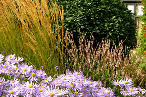 photograph of flowers planted by garden landscape company Babylon Design Watlington Oxfordshire