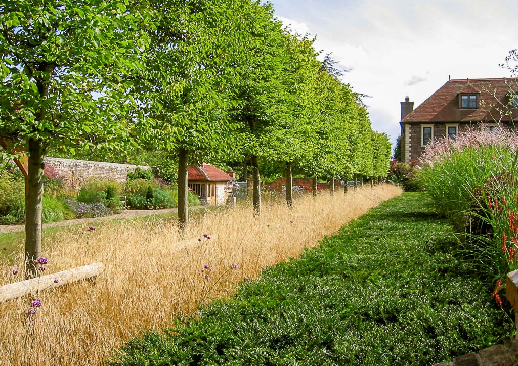 photograph of trees planted by garden maintenance company Babylon Design Watlington Oxfordshire