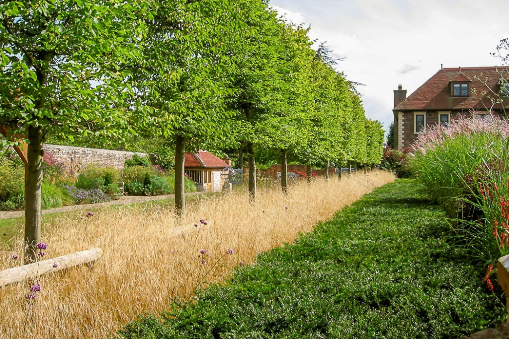 Row of trees planted by Babylon design