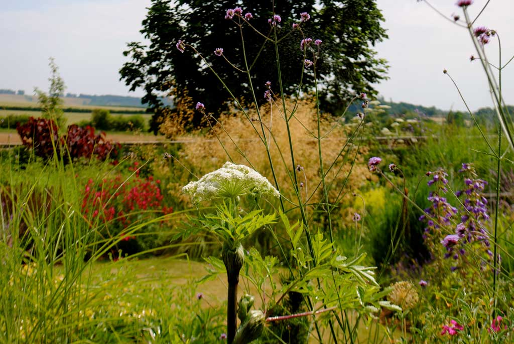 photo of plant borders Gardeners Oxfordshire