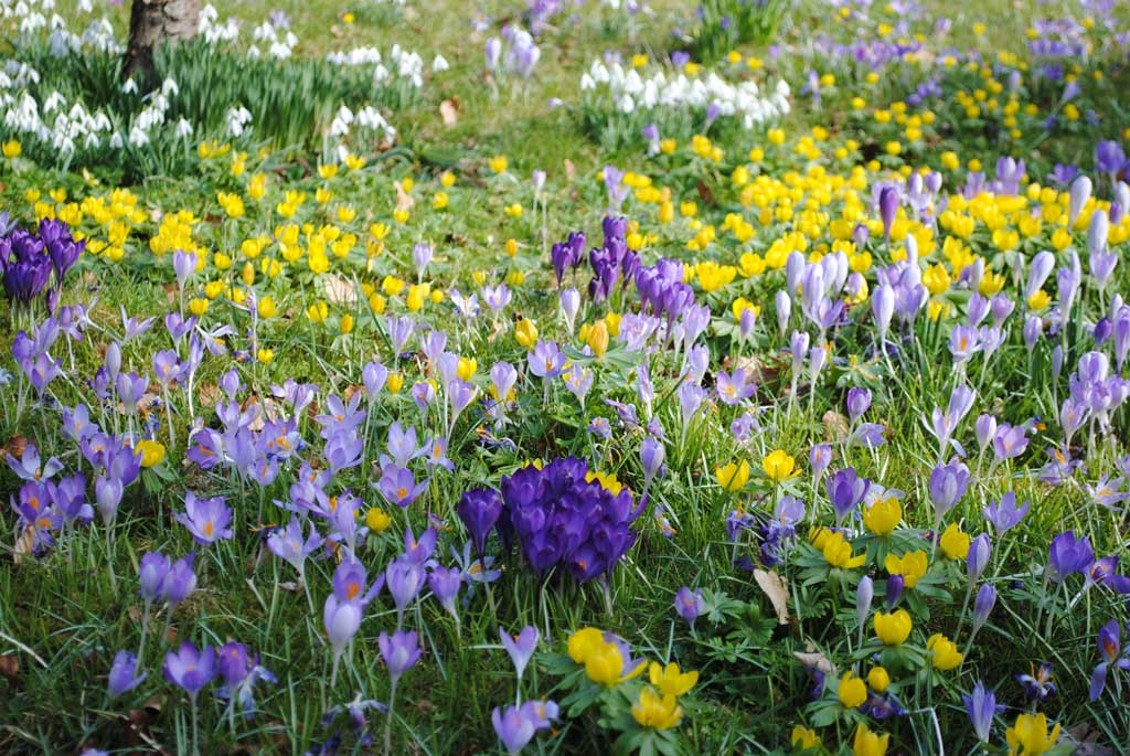 bulbs planted by Oxfordshire landscape gardeners