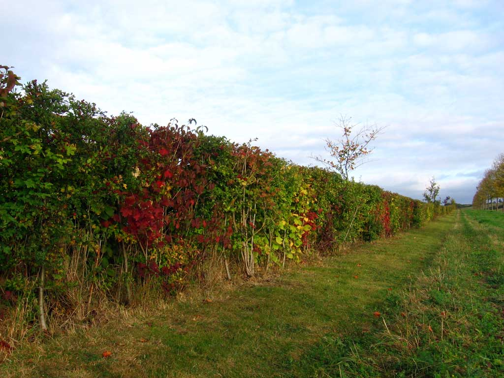 photograph of hedges by garden landscapers Oxfordshire