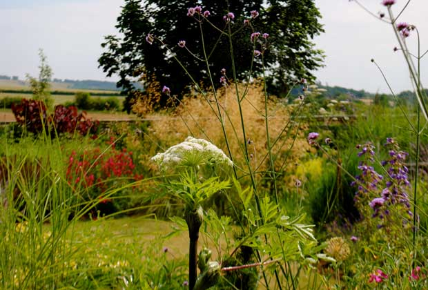 Photograph of Garden Design at a new build near Watlington by Babylon design