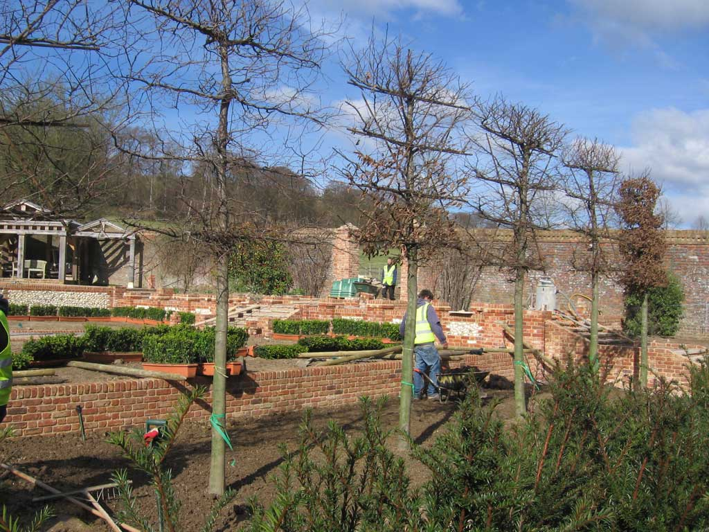 photo of trees being planted by landscapers Oxfordshire