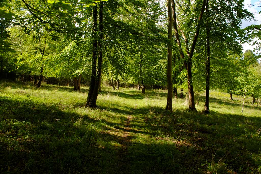 photograph of woodland enhancement by garden landscaping company Babylon Design Oxfordshire